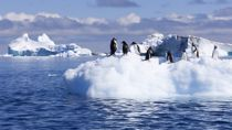 Crociere Capo Horn e Antartide